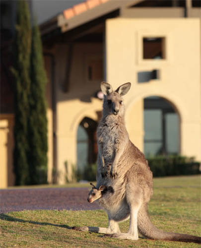 What's On Hunter Valley Region